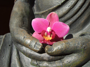 Buddha with Flower